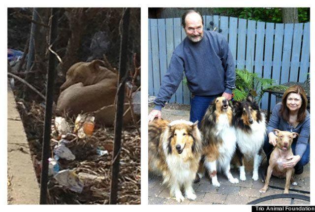 14-fotos-de-perros-rescatados-antes-y-despues-de-ser-adoptados-perro-trinity-Trio-Animal-Foundation