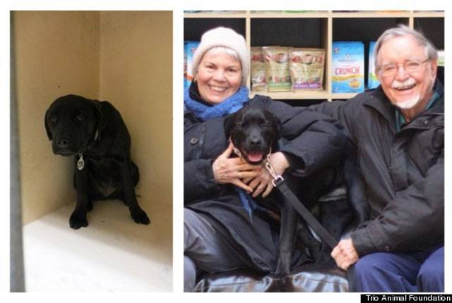 14-fotos-de-perros-rescatados-antes-y-despues-de-ser-adoptados-perro-whimsy-Trio-Animal-Foundation