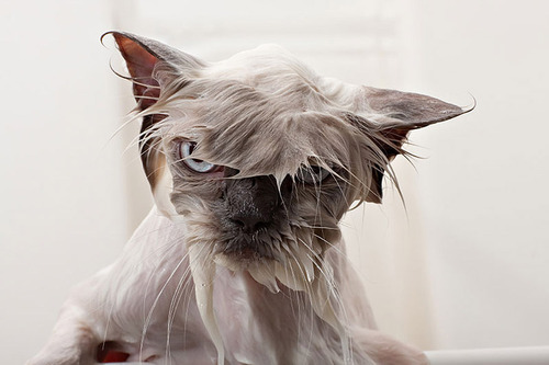 divertida-recopilacion-de-fotos-de-gatos-mojados-con-jabon