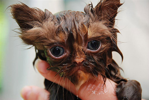 divertida-recopilacion-de-fotos-de-gatos-mojados-triste
