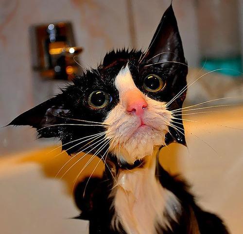 divertida-recopilacion-de-fotos-de-gatos-mojados