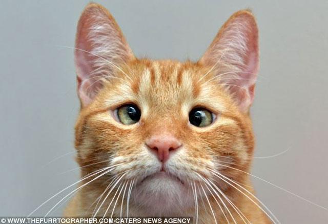 jarvis-gato-bizco-abandonado-dueno
