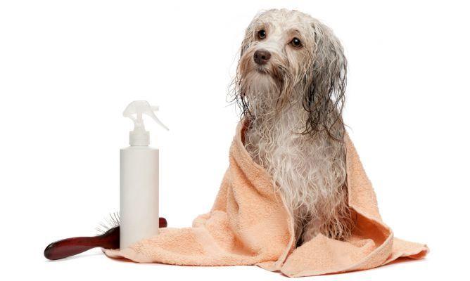 los-mejores-productos-para-la-proteccion-contra-parasitos-en-primavera-y-verano-para-tu-mascota