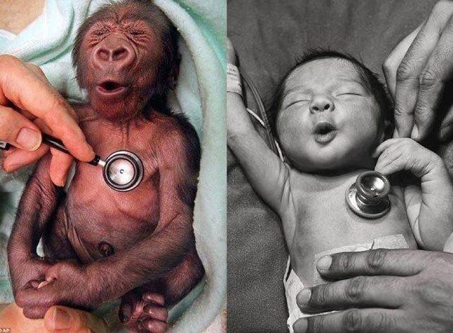 mismas-reacciones-mismas-sensaciones-de-un-bebe-humano-y-un-bebe-mono