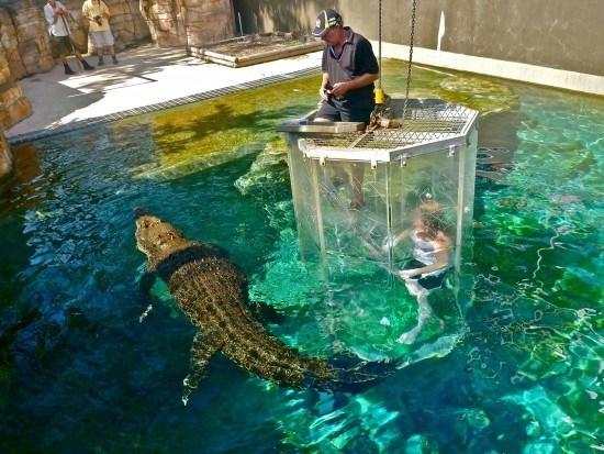 nadando-entre-cocodrilos-en-una-jaula-exterior