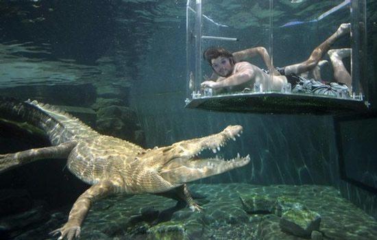 nadando-entre-cocodrilos-en-una-jaula