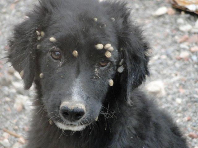parasitos-mas-comunes-perros-y-gatos