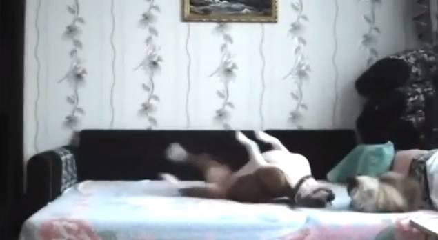perro-solo-en-casa-video