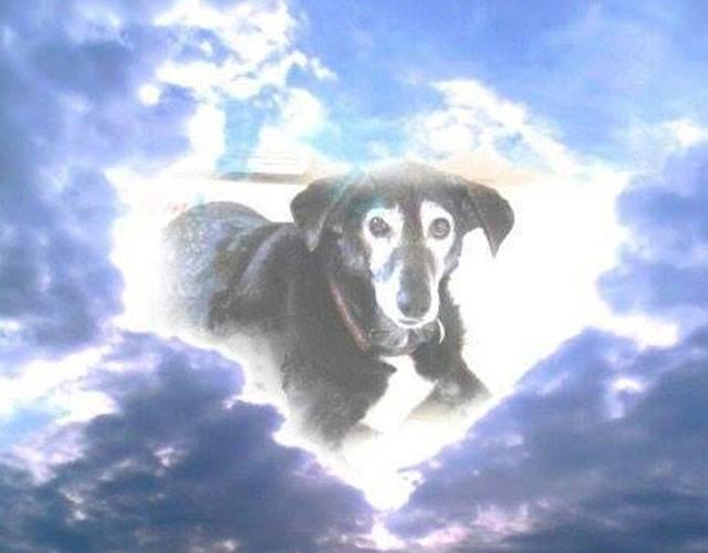 tributo-en-forma-de-carta-de-un-hombre-hacia-su-perro-recien-fallecido-hombre-escribe-carta-a-perro-muerto