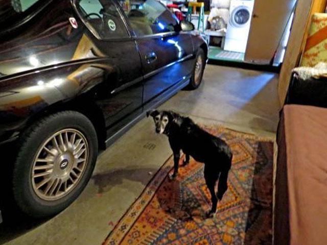 tributo-en-forma-de-carta-de-un-hombre-hacia-su-perro-recien-fallecido-hombre-recuerda-a-zoe-perro-muerto