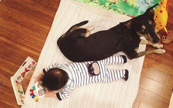 fotos-adorables-de-un-bebe-y-su-perro-hechas-por-la-madre-jugando