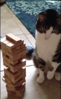 gato-juega-jenga