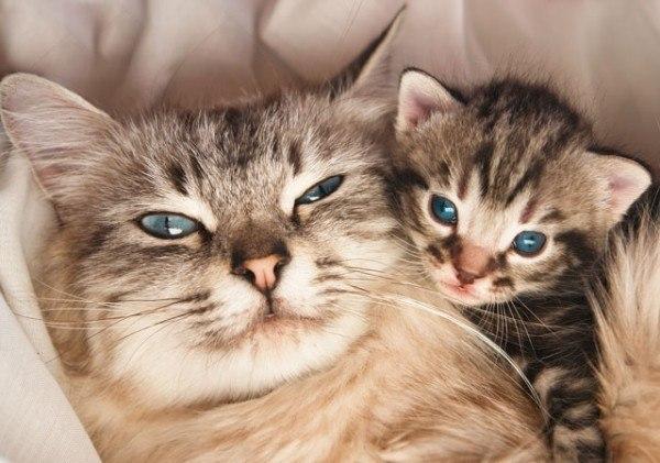 los-mejores-selfies-de-perros-gatos-y-mas-animales