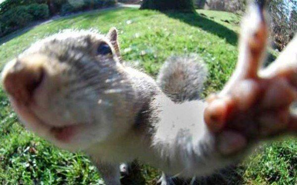 los-mejores-selfies-de-perros-gatos-y-mas-animales-ardilla
