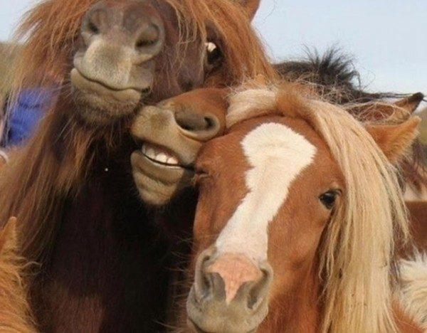 los-mejores-selfies-de-perros-gatos-y-mas-animales-caballos
