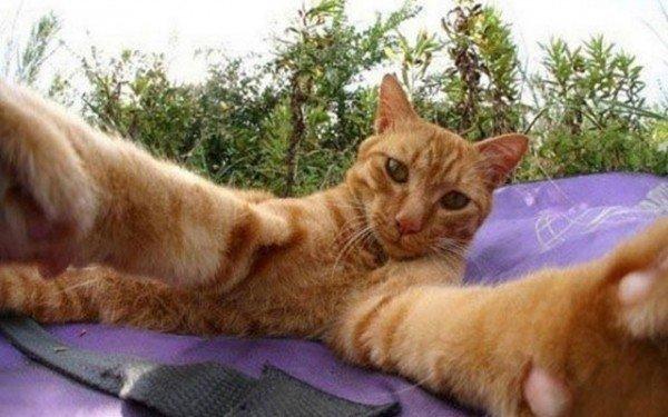 los-mejores-selfies-de-perros-gatos-y-mas-animales-gato