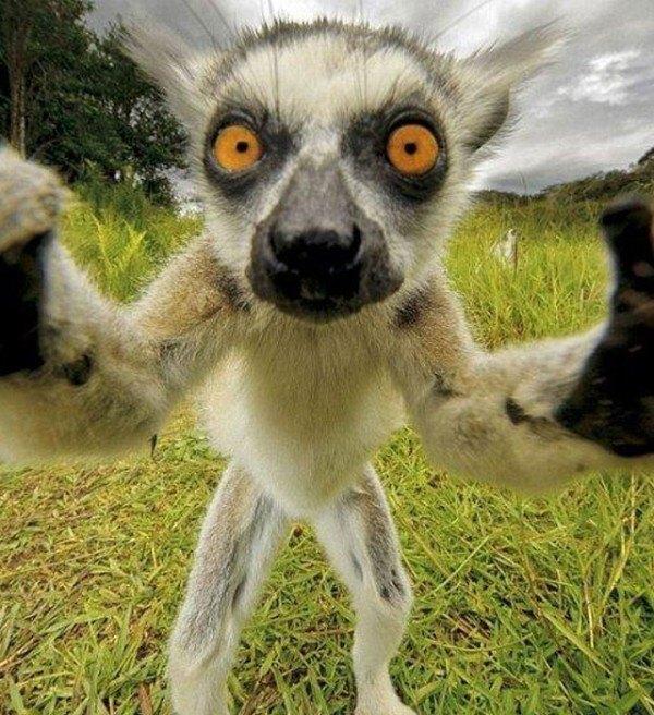 los-mejores-selfies-de-perros-gatos-y-mas-animales-lemur