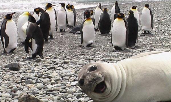 los-mejores-selfies-de-perros-gatos-y-mas-animales-leon-marino