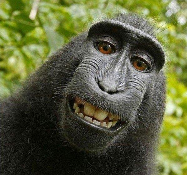 los-mejores-selfies-de-perros-gatos-y-mas-animales-mono