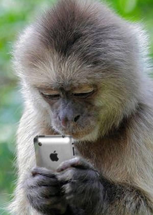 los-mejores-selfies-de-perros-gatos-y-mas-animales-mono-con-un-iphone