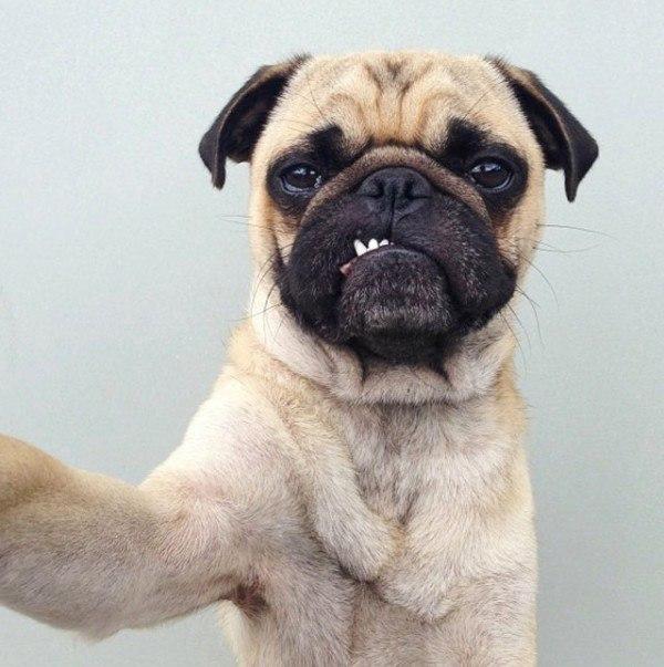 los-mejores-selfies-de-perros-gatos-y-mas-animales-perro-sacando-dientes