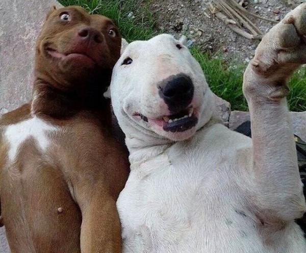 los-mejores-selfies-de-perros-gatos-y-mas-animales-perros-tumbados