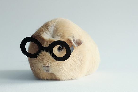 adorable-cobaya-causa-sensacion-en-las-redes-sociales-con-gafas