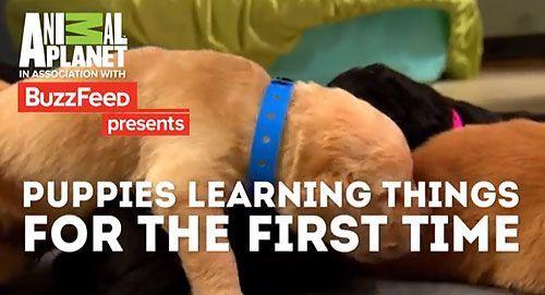 cachorros-haciendo-cosas-por-primera-vez-video-portada-video