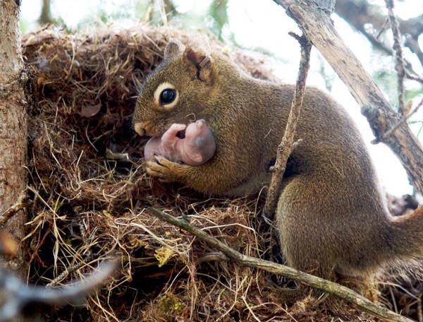 los-25-momentos-madre-e-hijo-mas-adorables-del-mundo-animal-ardilla-con-su-cria-recien-nacida