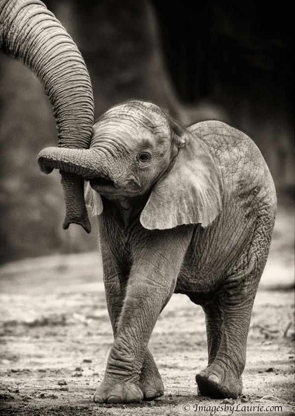 los-25-momentos-madre-e-hijo-mas-adorables-del-mundo-animal-cria-elefante-cogida-a-la-trompa-de-su-madre