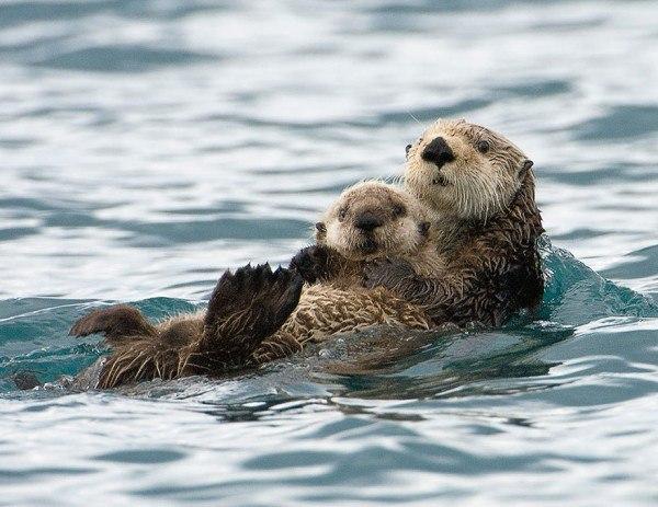 los-25-momentos-madre-e-hijo-mas-adorables-del-mundo-animal-madre-castor-con-su-cria