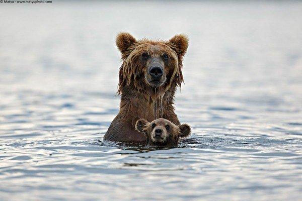 los-25-momentos-madre-e-hijo-mas-adorables-del-mundo-animal-madre-y-cachorro-oso-en-un-baño