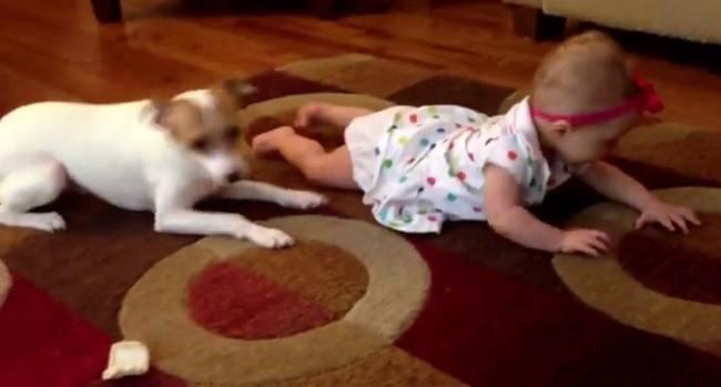 perro-ensena-a-una-nina-pequena-a-gatear