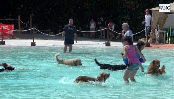 primer-parque-acuatico-para-perro-en-españa