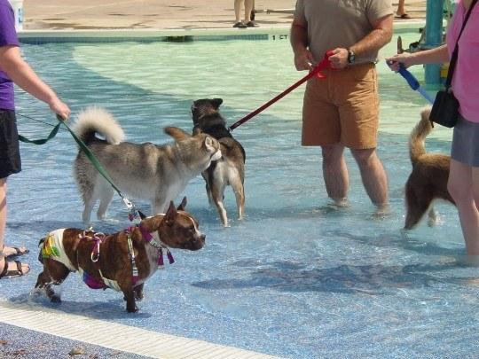 primer-parque-acuatico-para-perro-en-espana-detalle-de-las-instalaciones
