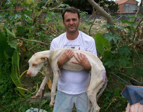 un-hombre-salva-la-vida-a-un-perro-de-la-raza-pit-bull-que-esta-a-punto-de-morir-davi-en-brazos-de-wilson