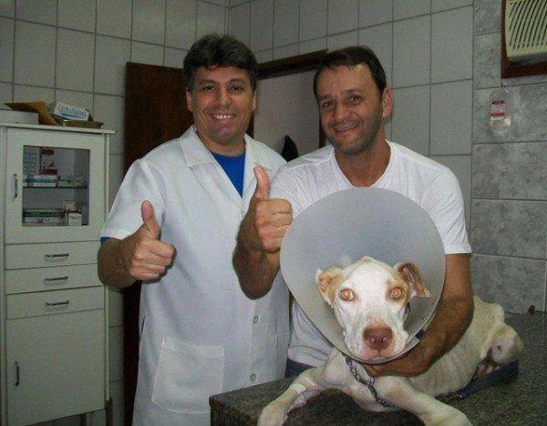 un-hombre-salva-la-vida-a-un-perro-de-la-raza-pit-bull-que-esta-a-punto-de-morir-davi-en-el-veterinario