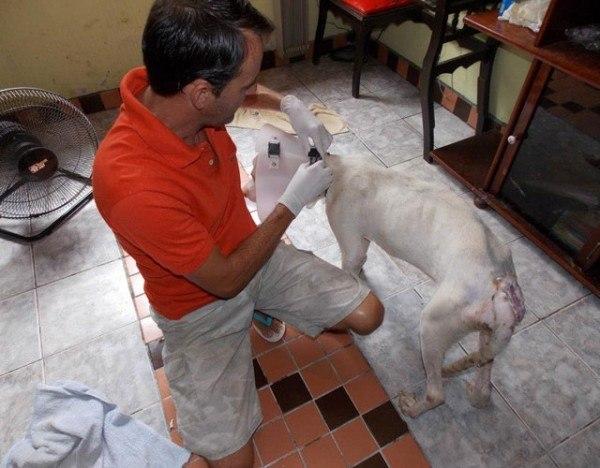 un-hombre-salva-la-vida-a-un-perro-de-la-raza-pit-bull-que-esta-a-punto-de-morir-wilson-y-davi-en-pleno-tratamiento