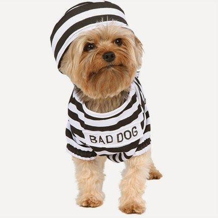 disfraces para perros y d nde comprarlos carnaval 2018 y