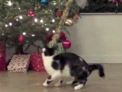 Gatos contra Árboles de Navidad 2014 – La pelea definitiva (Vídeo)