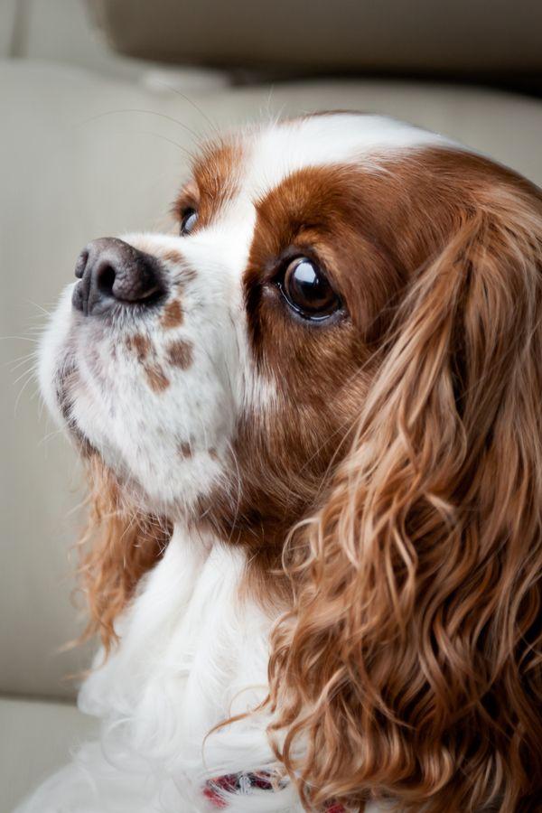 mejores nombres para perros