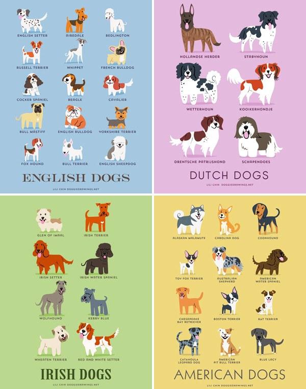 200 razas de perros clasificadas según su país de origen ...
