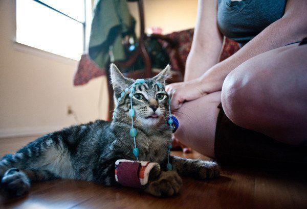 los-mejores-consejos-y-trucos-para-hacer-fotos-perfectas-a-un-gato-estar-preparado