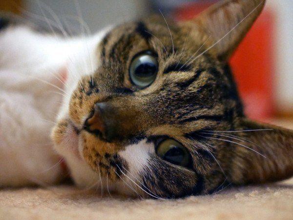 los-mejores-consejos-y-trucos-para-hacer-fotos-perfectas-a-un-gato-hay-que-ir-hacia-abajo