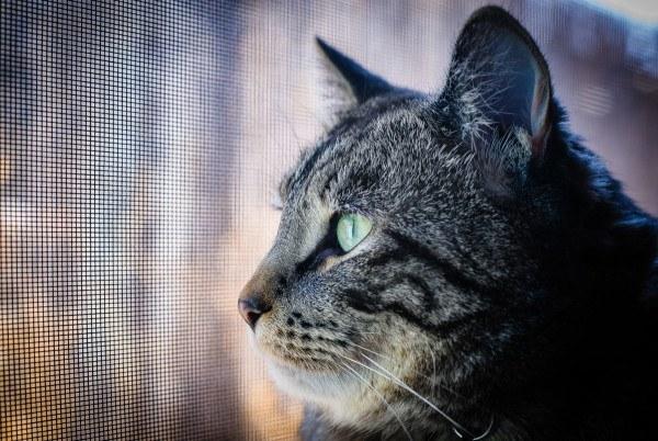 los-mejores-consejos-y-trucos-para-hacer-fotos-perfectas-a-un-gato-no-utilices-demasiado-flash