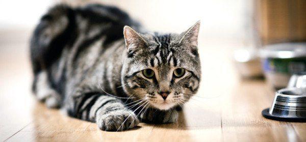 mejores-consejos-y-trucos-para-hacer-fotos-perfectas-a-un-gato