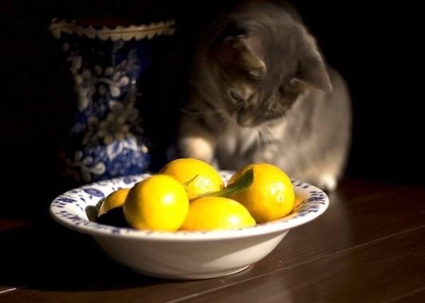 21 remedios caseros y naturales para mascotas - Acabar con las pulgas en casa ...