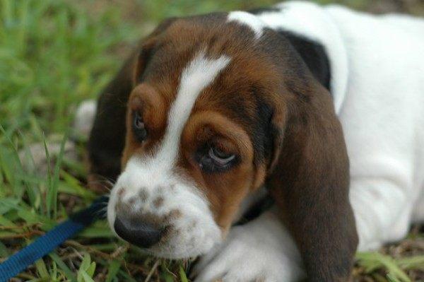21-remedios-caseros-y-naturales-para-mascotas-cuando-comen-algo-que-no-deberian