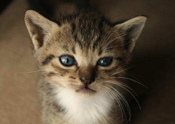 21-remedios-caseros-y-naturales-para-mascotas-cuidados-de-los-ojos