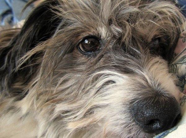 21-remedios-caseros-y-naturales-para-mascotas-rehidratacion-importancia